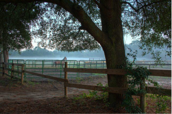 15. Aiken's Horse Country