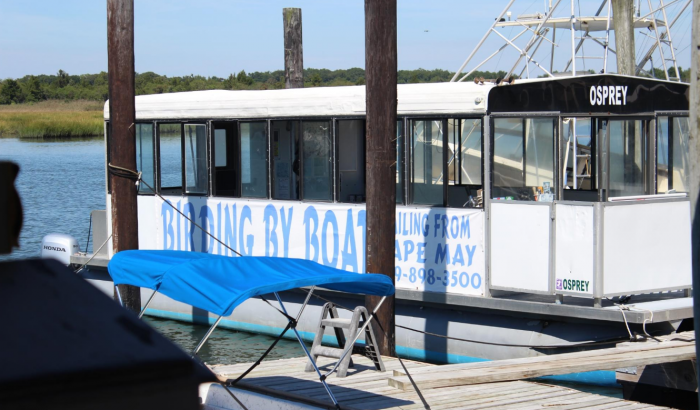 2. Birding By Boat, Cape May