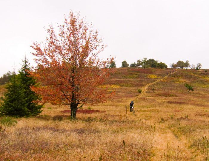 6. Bear Rock Trail, Dolly Sods