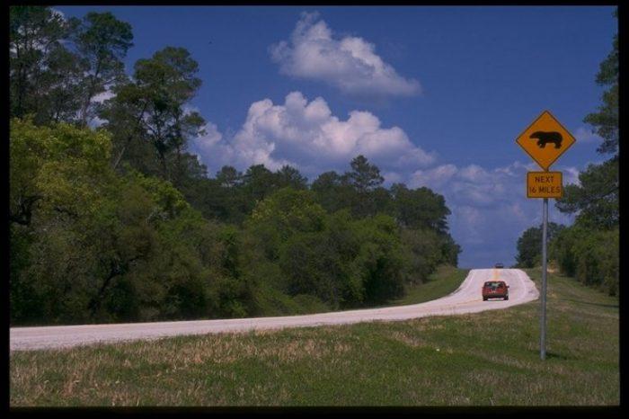 3. Florida Black Bear Scenic Byway