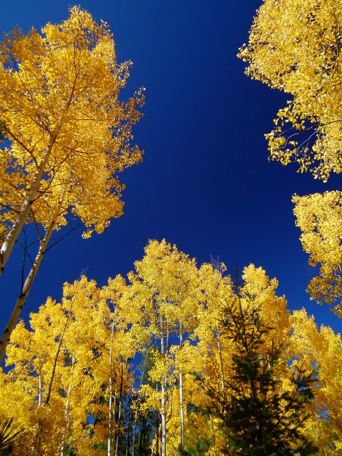 1. Blue skies