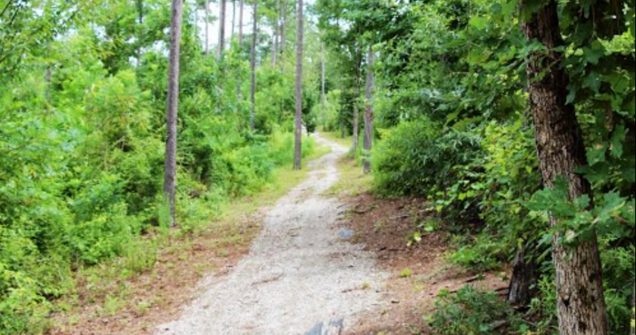 6. Bogue Chitto State Park Trail, Franklinton