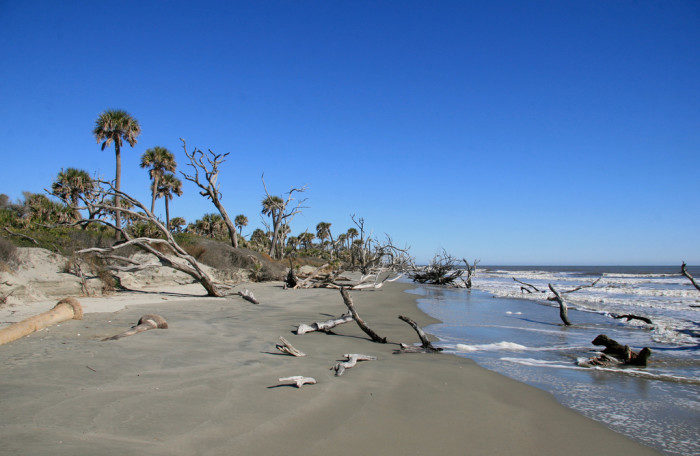 South Carolina: Bull Island