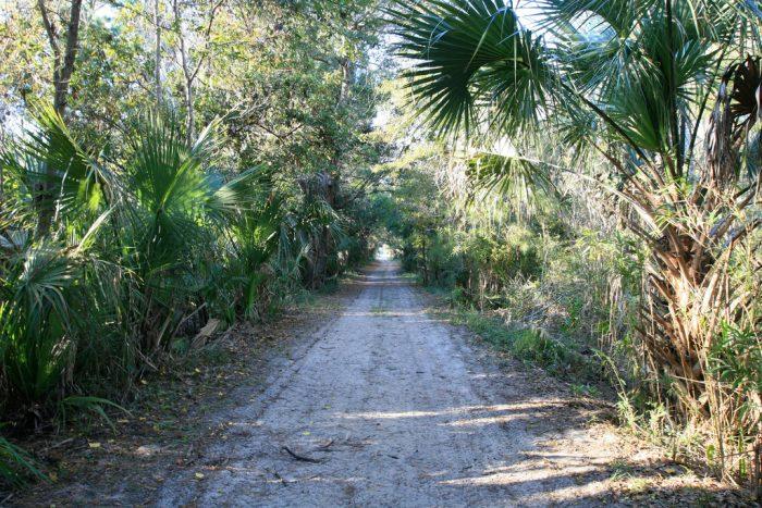 bull-island-trail-and-road