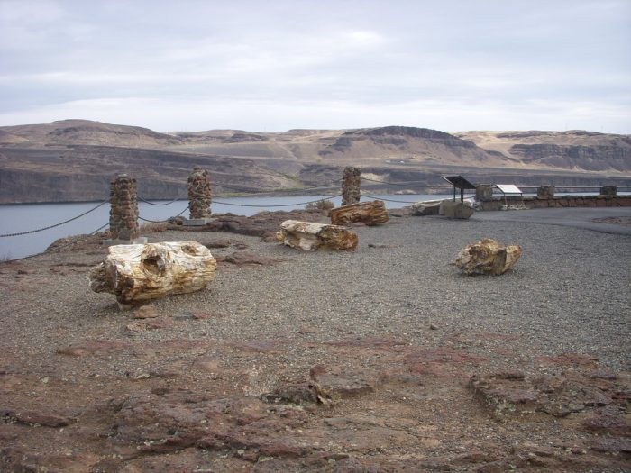 4. Ginkgo Petrified Forest, Vantage