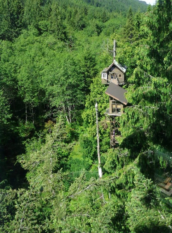 15. Washington: Cedar Creek Treehouse