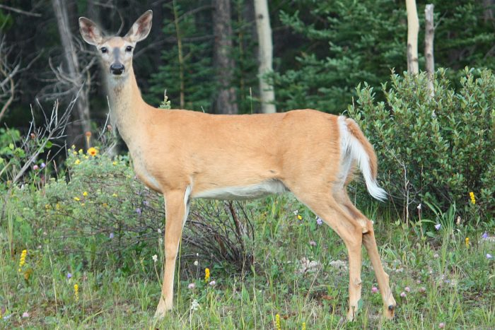 2. When you drive down the road, you automatically scan the sides for deer or other wildlife.