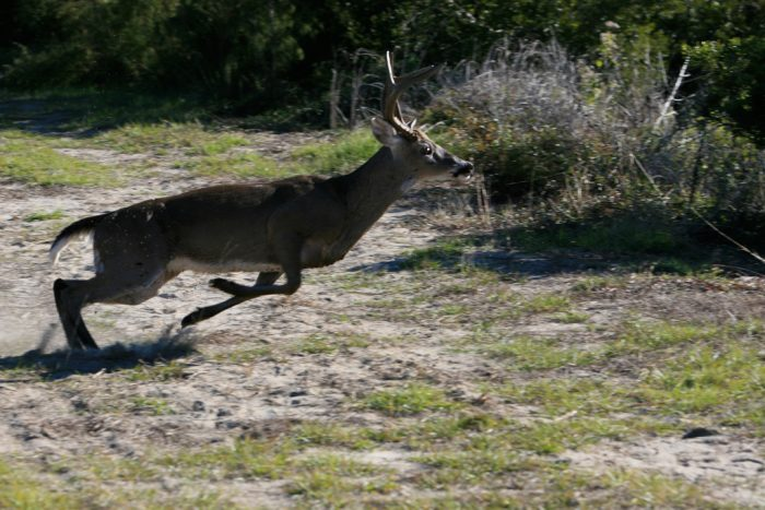 deer-on-bull-island