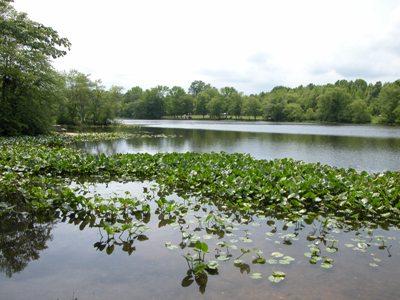 4. Beck's Pond, Bear