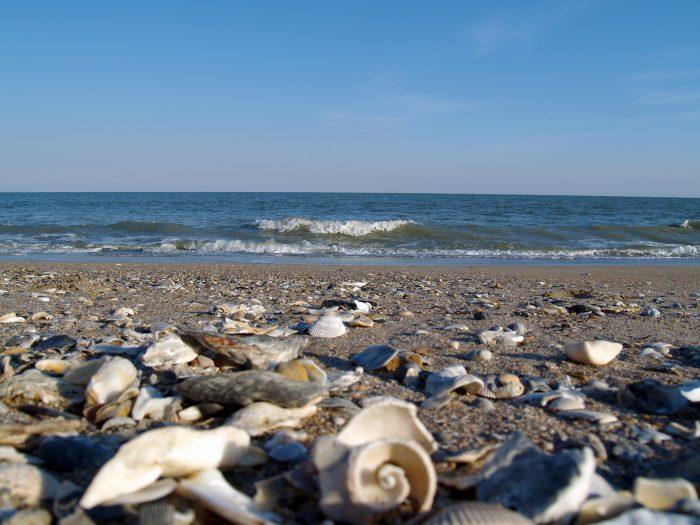 6. Edisto Beach State Park - Edisto Island, SC