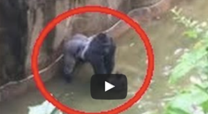 What Was Caught On Film At An Ohio Zoo Will Stop Your Heart