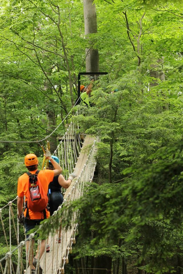 wildwood rushfacebook - Green Canopy 2016