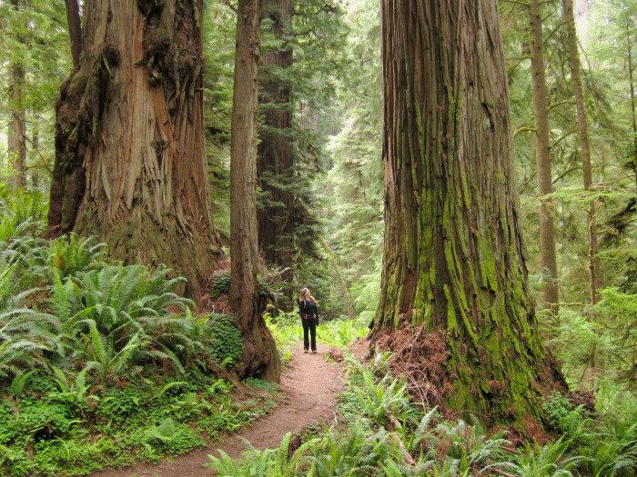 California: Jedediah Smith Redwoods State Park