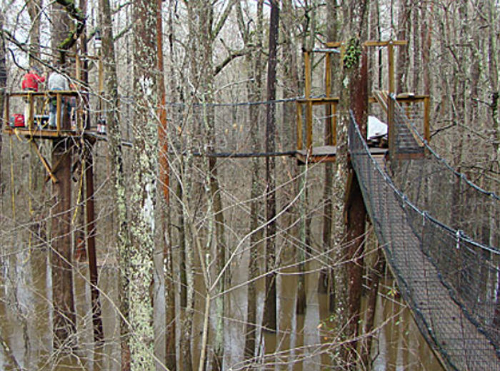 The Terrifyingly Fun Canopy Walk In Coward South Carolina