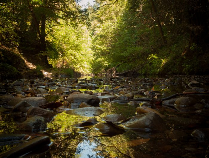 8. Bridge Trail, Pescadero County Park