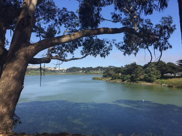 8 Lake Merced: You don't even need to leave the city for this one…