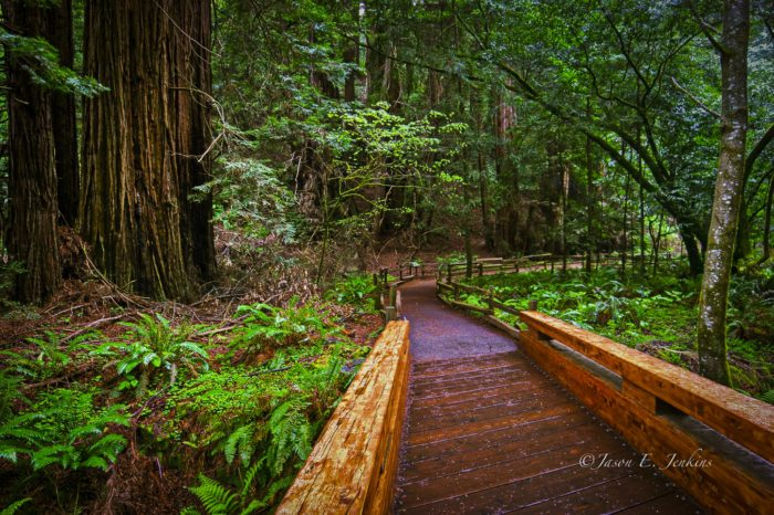 4. California: Muir Woods