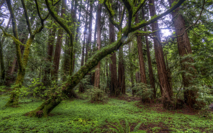 5. Muir Woods National Monument