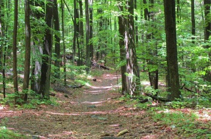 6. Ragged Mountain Preserve Trail (Berlin)