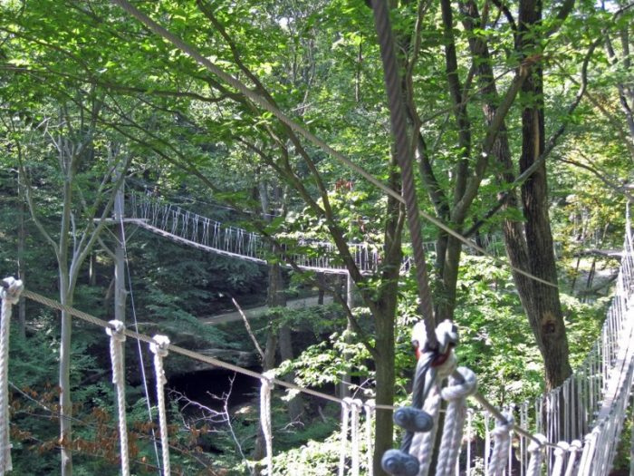 Along their zipline canopy tour, you'll complete 10 zip lines and cross five adventure skybridges.