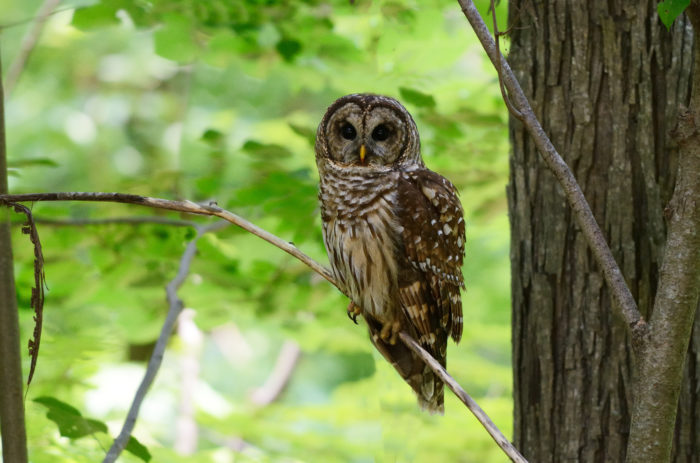 6. Hoot Owl - With a population of four, whooooo cares what the town name is.