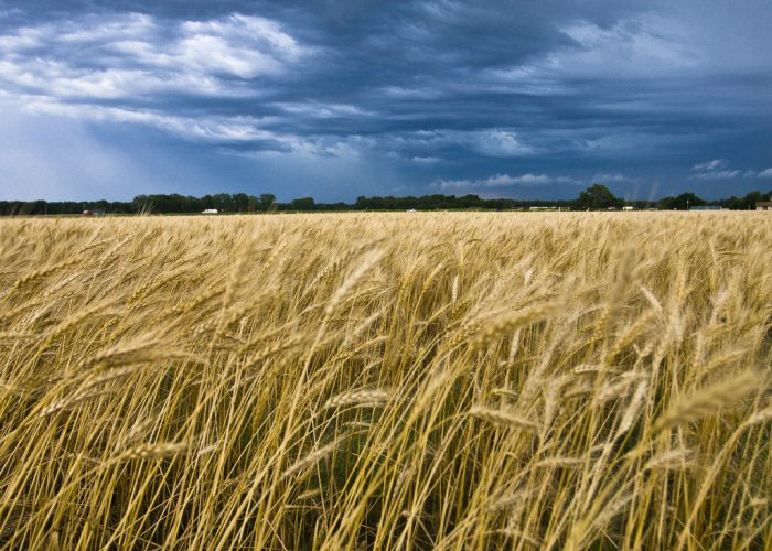 2. And the 4th largest supplier of wheat in the country.