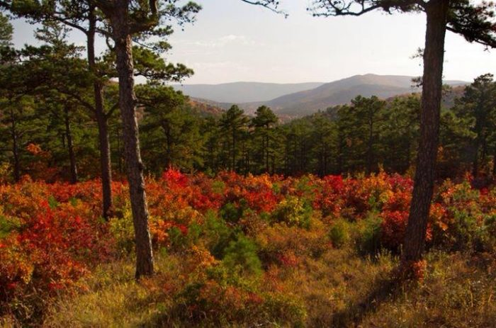 3. The fall colors in Big Cedar, Oklahoma are a sight to behold.