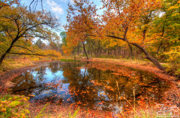 Beaver Pond looks gorgeous with its bold, fall foliage.