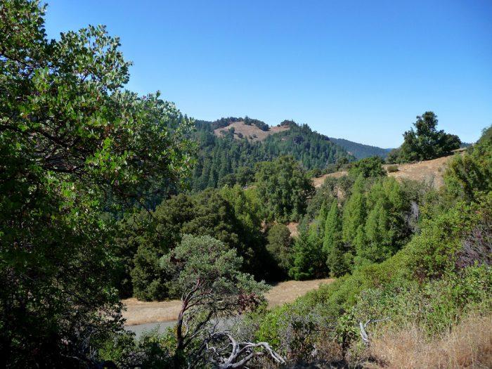 3. Montgomery Grove Trail, Mondocino