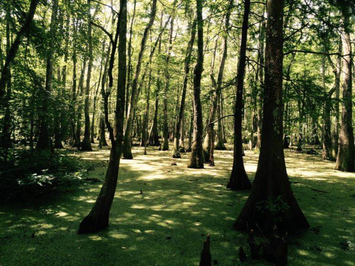5) Palmetto Island State Park, Abbeville