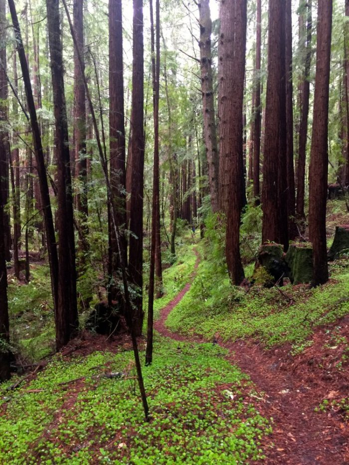 8. Portola Redwoods State Park is a quiet spot full of sky-touching trees, tucked away in the small town of La Honda.