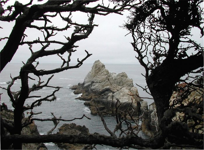 13. Point Lobos