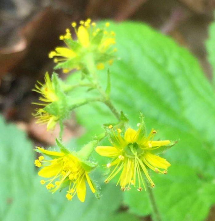 rare-plants