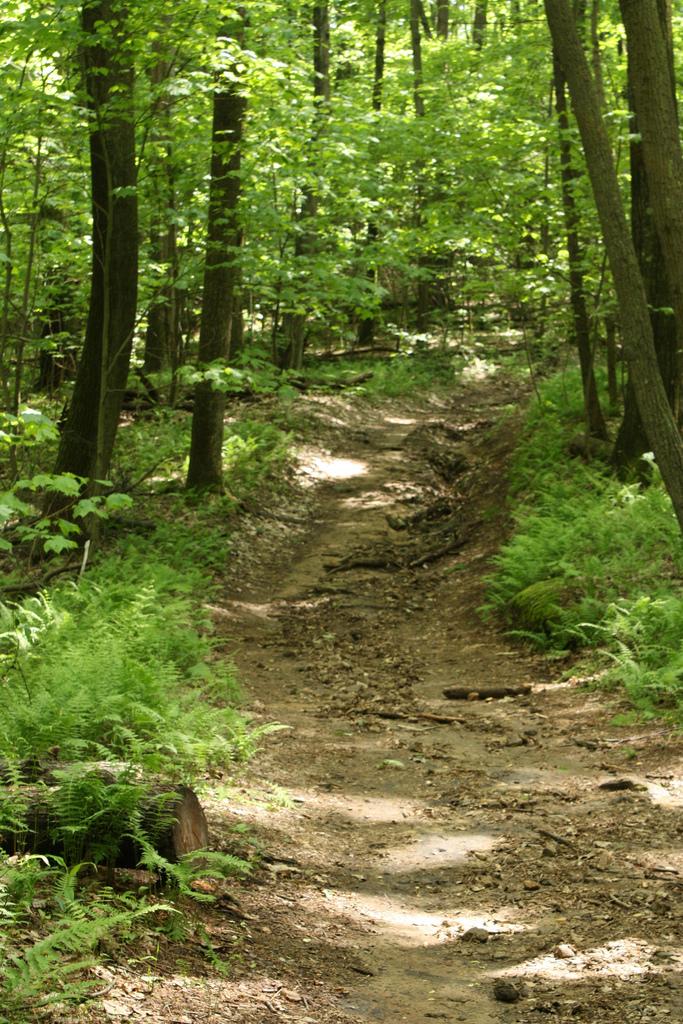5. Raven Rock Trail near Morgantown