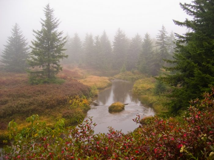 7. Red Creek Trail, Dolly Sods