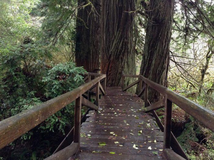 4. Prairie Creek Redwoods