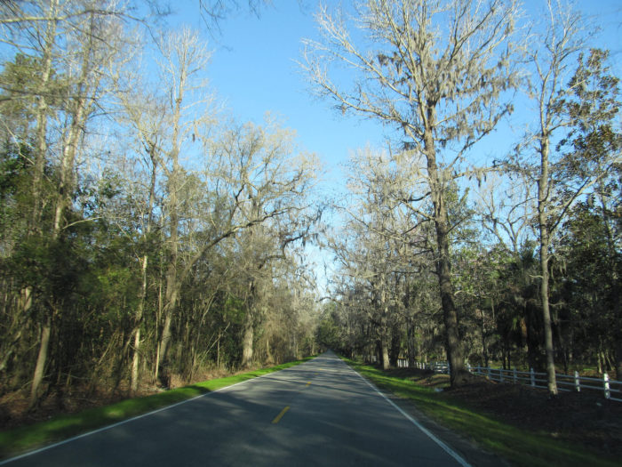 6. Ashley River Road National Scenic Byway (SC 61)