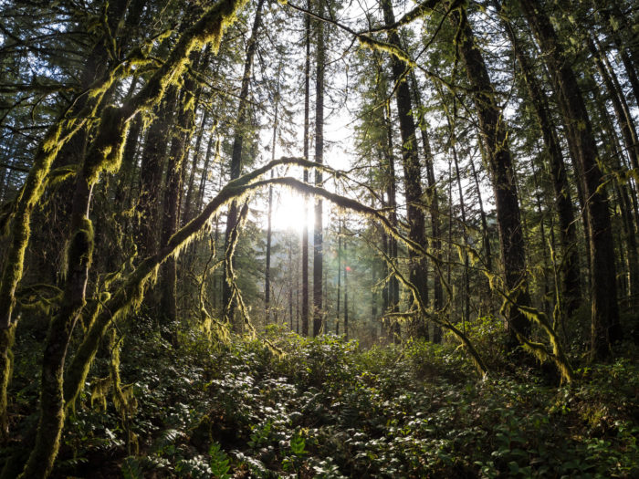 3. Silver Falls State Park - Sublimity, OR