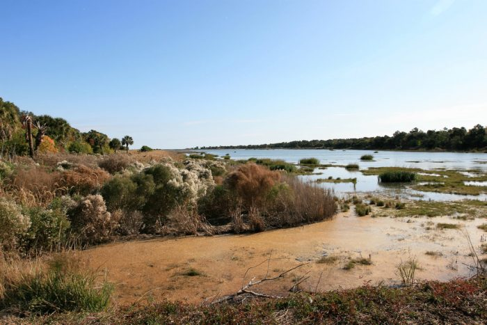 swamp-bull-island