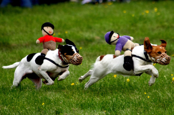 5. Go watch a dog race. Terrier Racing is a big hit at the Colonial Cup in Camden.