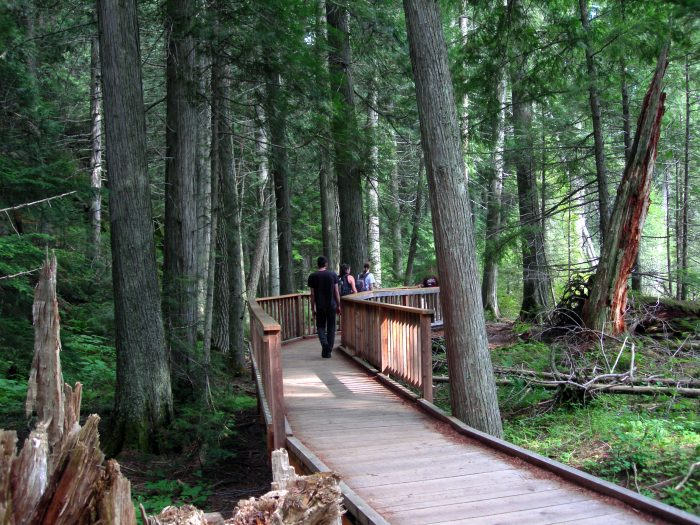 4. At Glacier National Park, hike the Trail of the Cedars.