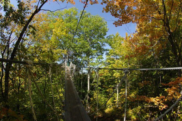tree bridge