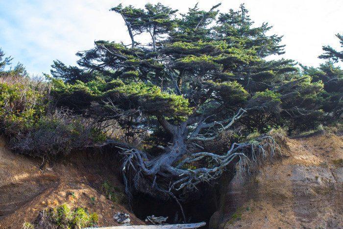 12. Washington: Tree Root Cave