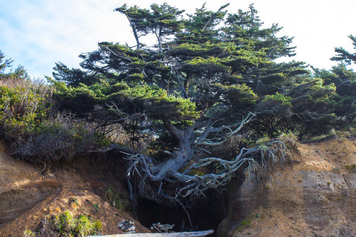 7. Tree Root Cave