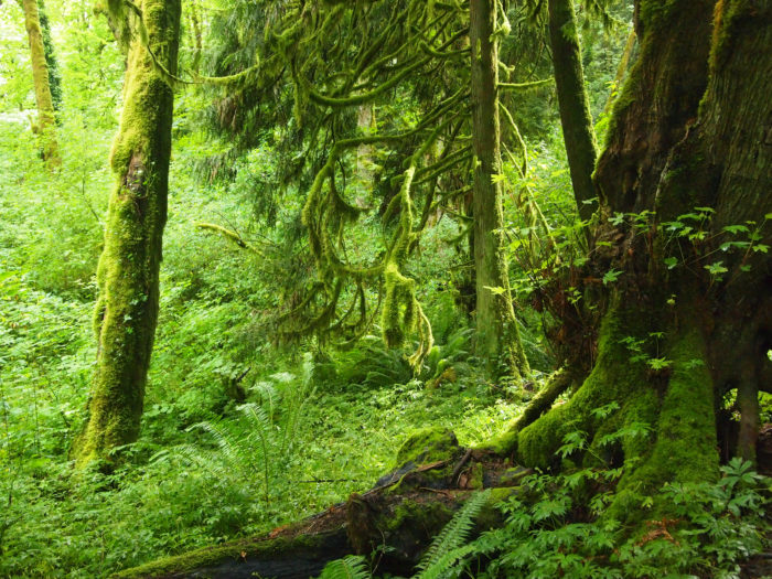 8. Tryon Creek Natural Area - Portland, OR