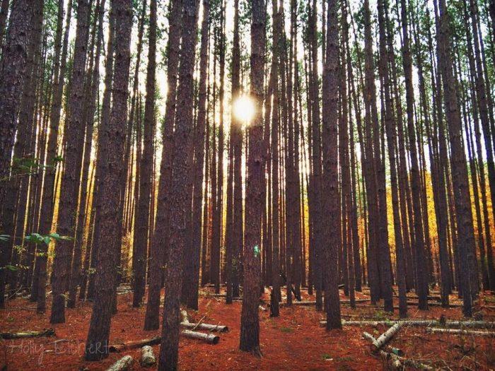 3. The sun peeking through the trees at Oak Openings  in Swanton is mesmerizing.