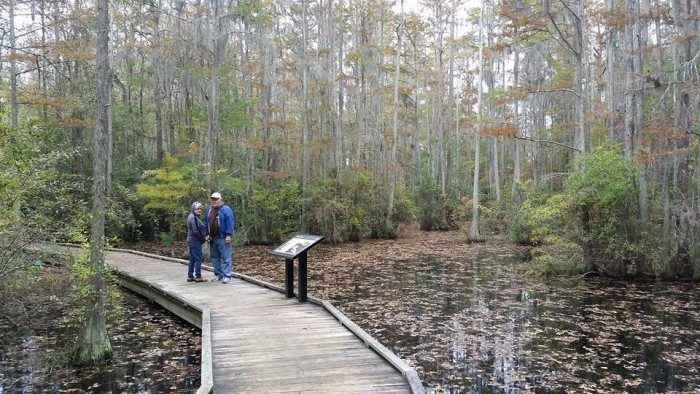 South Carolina: Woods Bay State Park
