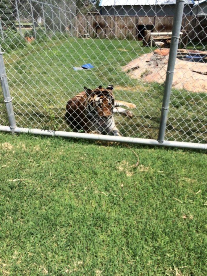 13. Hillcrest Park Zoo