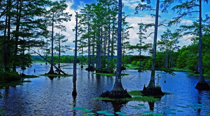 1. Located in the Noxubee Wildlife Refuge, this stunning cypress swamp is home to a number of species.