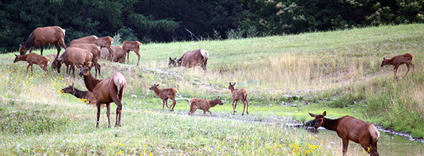 1. View Pennsylvania's elk aboard a covered wagon.
